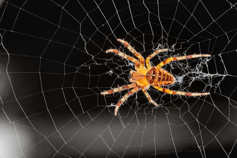Spider-Not Spider killer