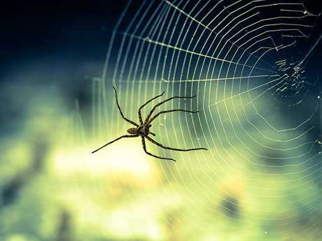 Spider-Not to eliminate spiders